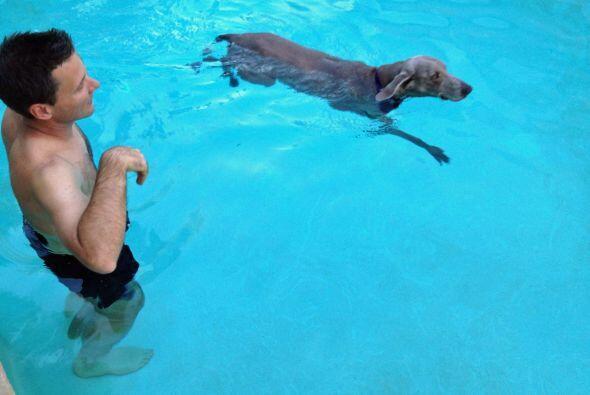 Ahora tiene miles de motivos para ser un perro feliz, después de un pasa...