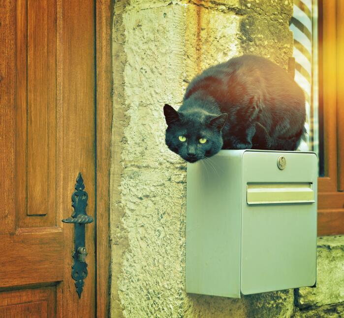 Conoce el misticismo del gato negro  16.jpg