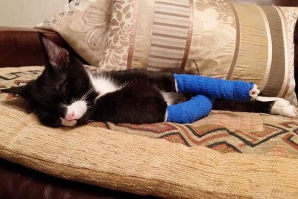 El pequeño nació con un defecto congénito en las patas delanteras que le...