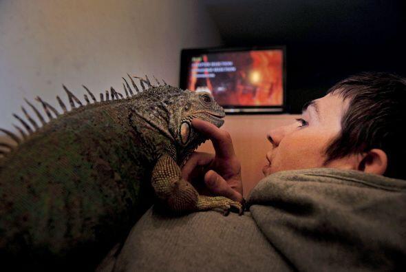 """""""Mis reptiles son mis hijos. Hace mucho que comprendí lo difícil que ser..."""