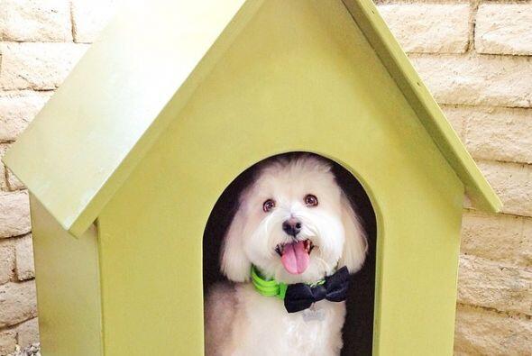 Bones es un perrito muy feliz que disfruta de la vida.