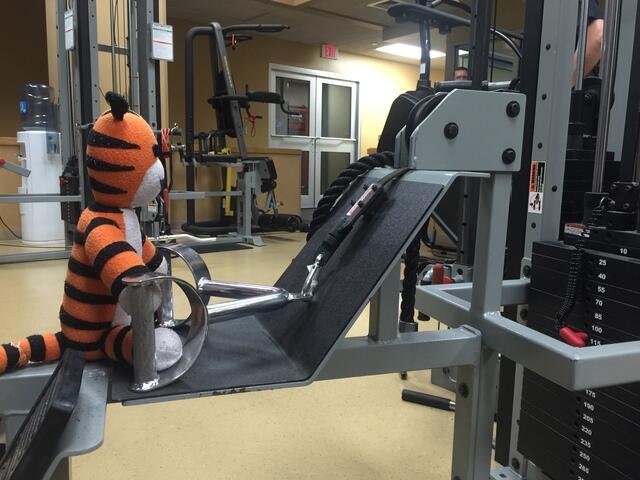 Las aventuras del tigre perdido Hobbs