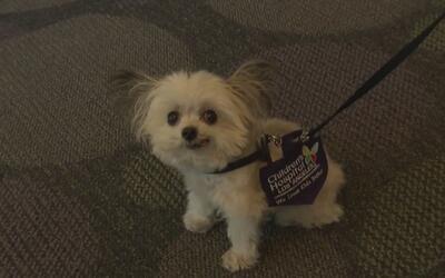 Conoce a Norbert, un pequeño perrito que cambia la vida de miles de niños