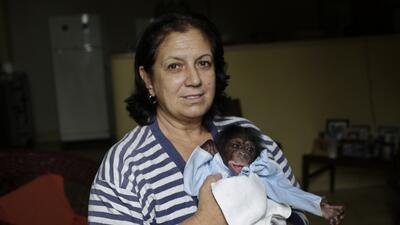 Estos bebés chimpancés crecen como niños en Cuba (FOTOS)