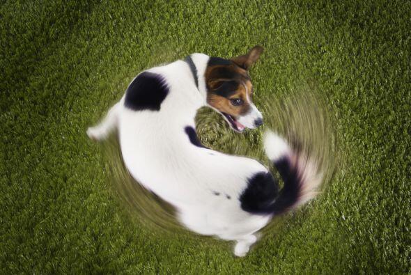 Son juguetones. Un perro en casa es casi siempre garantía de risas y div...
