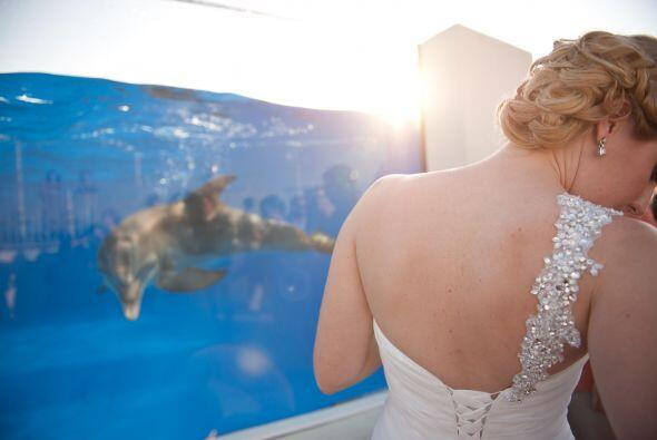 La boda se realizaba en el acuario Marineland Dolphin Adventure.