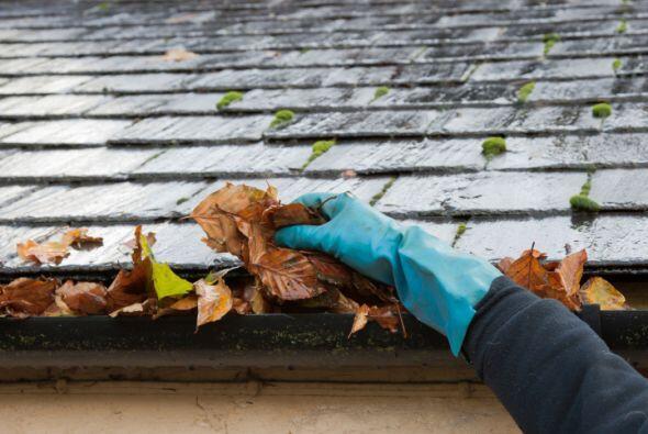 Limpia las vías de drenaje. Recoger las hojas y restos de suciedad antic...