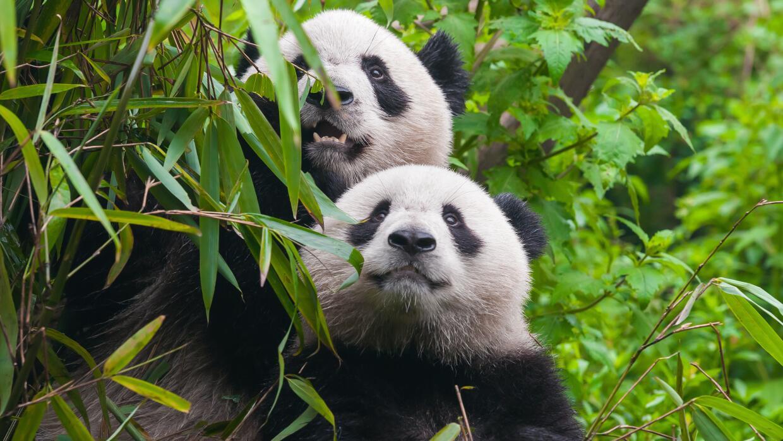 Maestros del camuflaje del reino animal: ¿los ves? istock-517054240.jpg