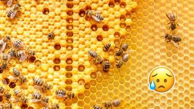 Crean abejas robots para salvar el mundo
