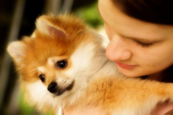 Es un perro leal y protector con sus dueños, pero tiende a ser reservado...