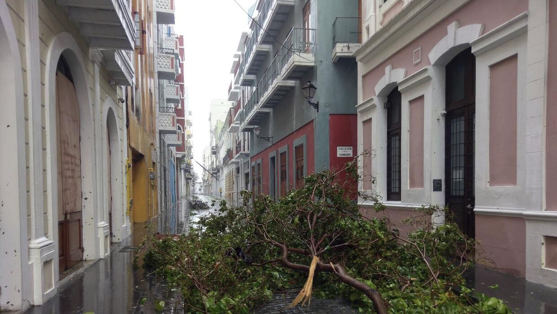 Árboles caídos en el Viejo San Juan tras el paso del hurac...