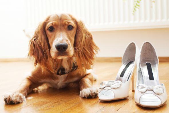 Si tu perro se resiste a esas opciones, existen miles de formas para pod...