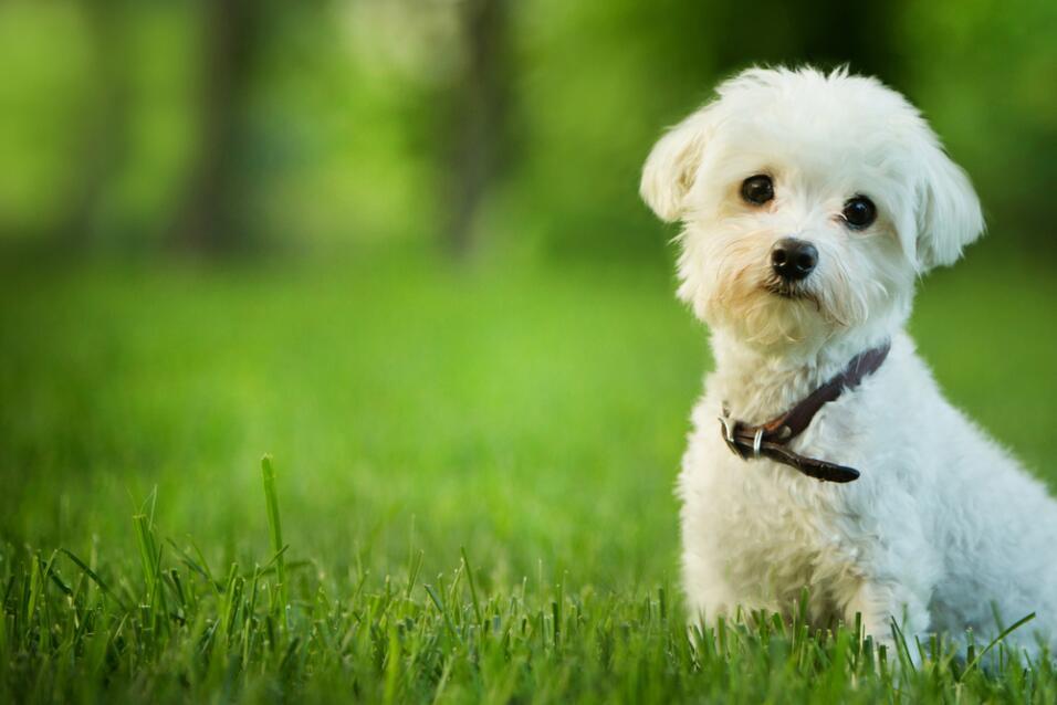 El perro ideal según tu signo
