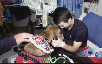 Alegría y beneficios la terapia con perros