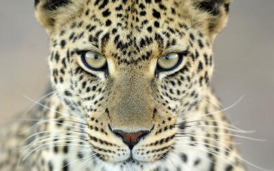 Restaurarán el Faro de Culebrita  martin-van-lokven-wildlife-photographe...