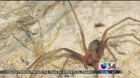 ¿Sabe qué hacer si lo pica un insecto venenoso?
