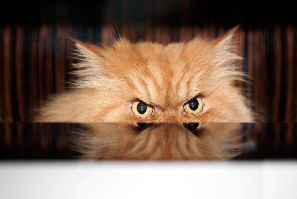 ¡No importa cuánto lo pienses, sus ojos lucen un poco intimidantes!