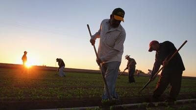 La jornada laboral de los campesinos en California se reduciría a 40 hor...