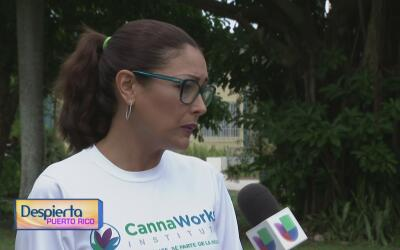 La Asociación de Cannabis Medicinal en Puerto Rico se mantiene pendiente...