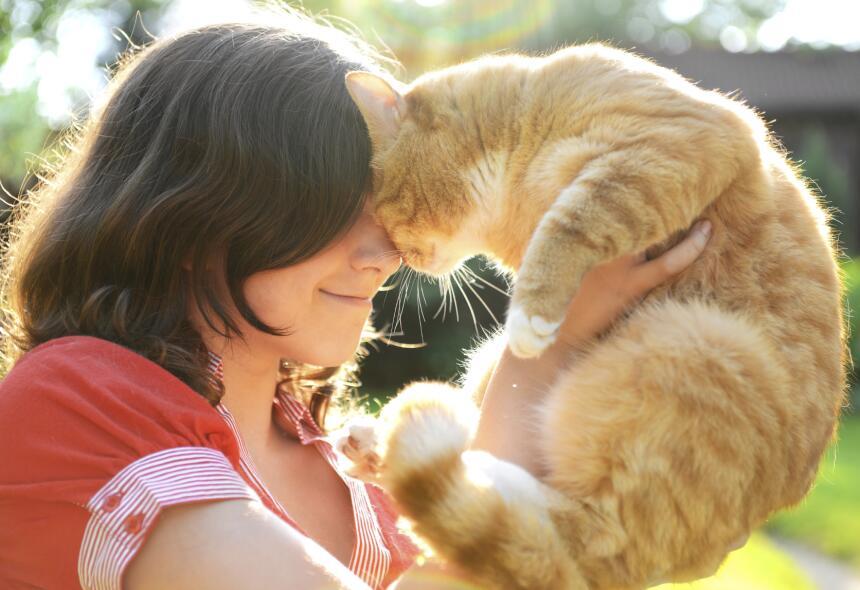 ¿Se puede entrenar a un gato? Aquí te decimos cómo