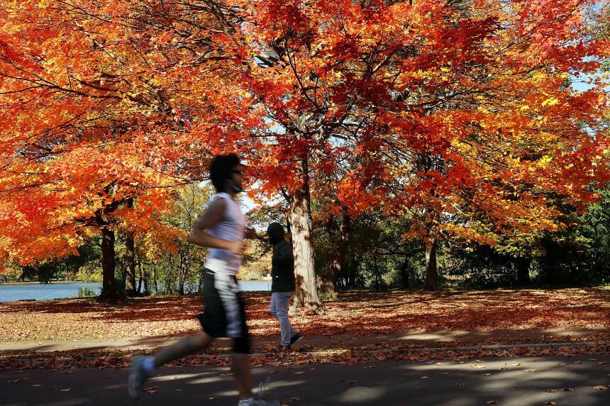 Así se vieron las últimas hojas otoñales del año en Prospect Park, Brook...