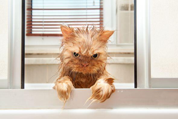 ¿Quién se atrevió a mojarlo? ¡Sufrirá la maldición del gato!