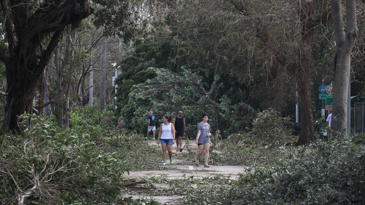 Hurricane Irma snapped brnaches and downed thousands of trees across Flo...