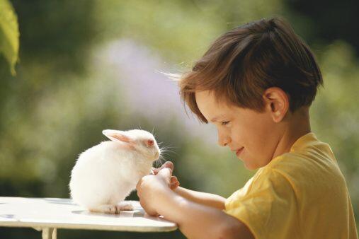 Conejos. Los siguientes mamíferos grandes que se recomiendan en e...