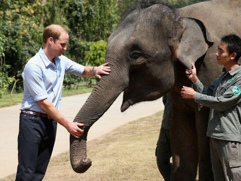 ¡Vaya sorpresa que le dieron a este elefante!