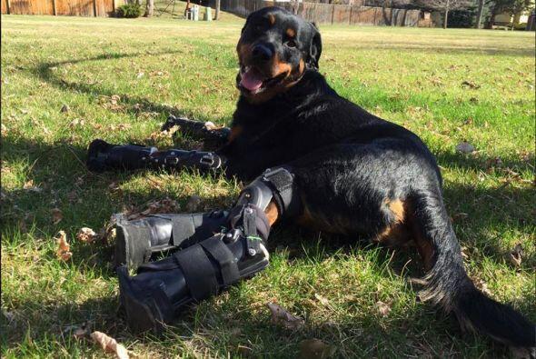 Serán seis meses en los que Brutus estará en rehabilitación acostumbránd...
