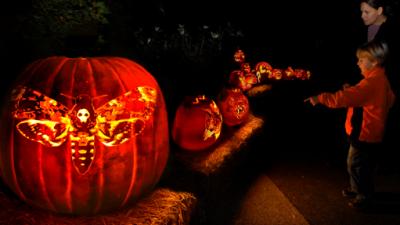 """El jardín botánico celebrará """"La noche de las 1,000 Jack-o'-Lanterns"""" este fin de semana"""