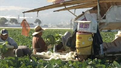 Agricultores lanzan campaña a favor de la reforma migratoria