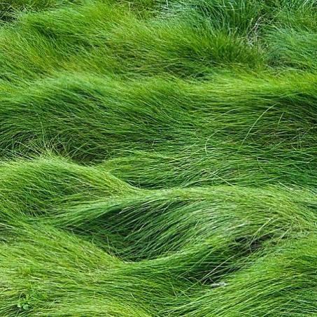 Arte verde para sanar la urbanización 13062320_10156846049525080_8931514...