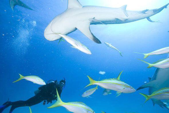 Abrió su álbum para mostrarnos cómo alimenta a los tiburones en medio de...