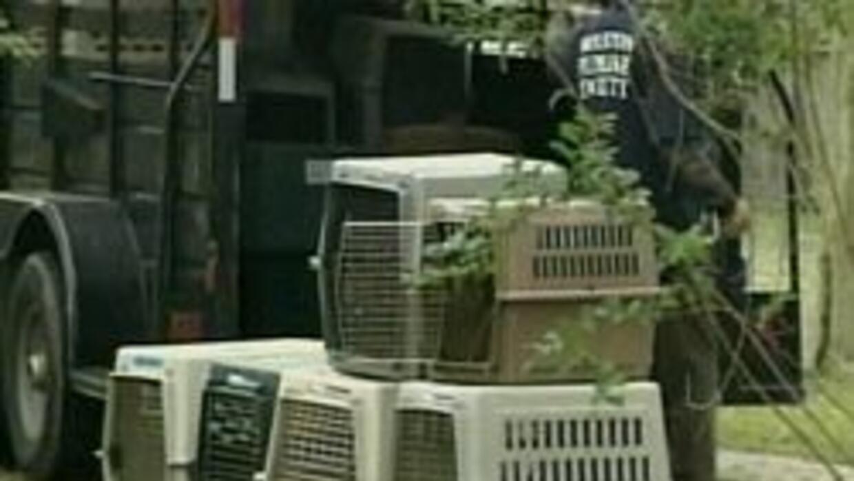 Campa?a contra crueldad con animales ee139037696241629b1767412bcd0985.jpg