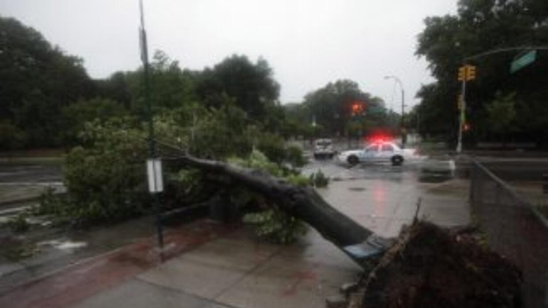Cientos de árboles caídos se apreciaron por todo Nueva York, durante la...