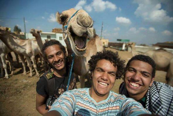 Sin lugar una selfie tan divertida que hasta el camello salió sonriendo.