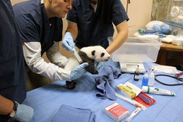 El nacimiento de Bao Bao ha devuelto la esperanza. El 'pequeño tesoro' p...