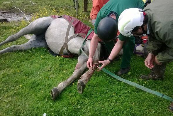 A medida que el rescate avanzaba, el equipo no estaba seguro del &eacute...