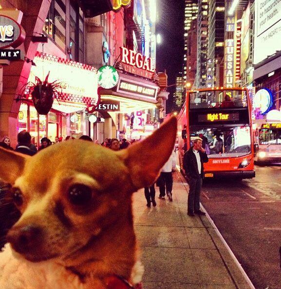 Llegando a Nueva York. Honey se siente toda una modelo.