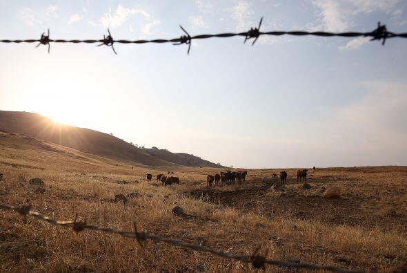 Un rebaño se alimenta en campo con pasto seco en las laderas que rodean...
