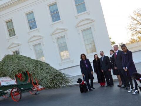 El árbol que engalanará la temporada de fiestas en la resi...