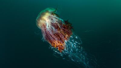 12 fotografías de la naturaleza como nunca la habías visto