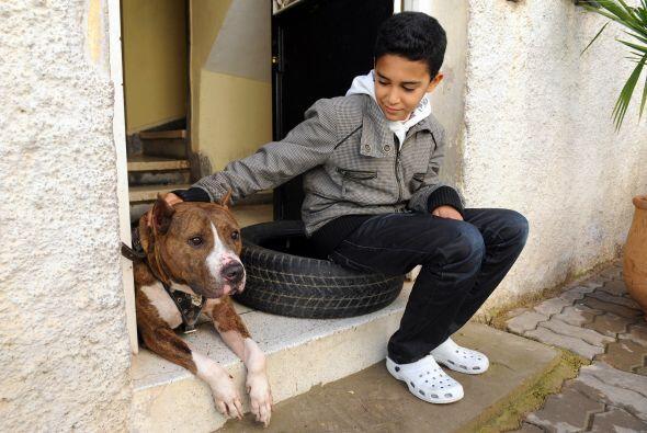 Sorprendentemente en el pasado los Pit bull eran llamados 'perros ni&nti...