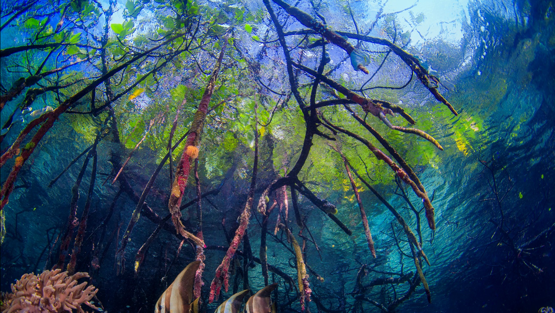 10 fotos que te provocarán dejarlo todo e irte a explorar la naturaleza...