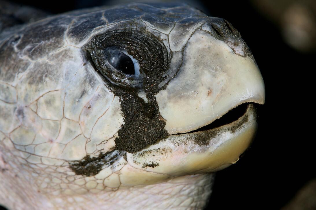 Cinco superpoderes de las tortugas que ni sospechabas GettyImages-785119...
