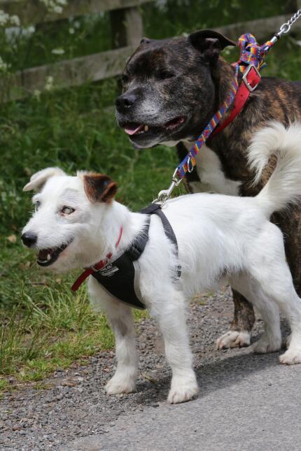Perro ciego con perro guía