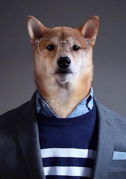 Bodhi, el perro fashionista