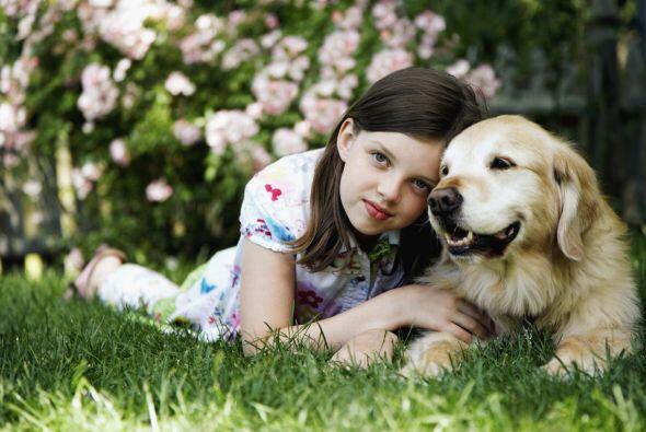 Los niños también tienen más actividad física si tienen un perro como ma...
