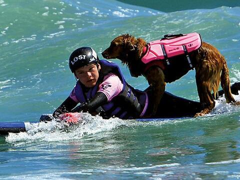Este perro es la mejor compañía para surfear y para curar...